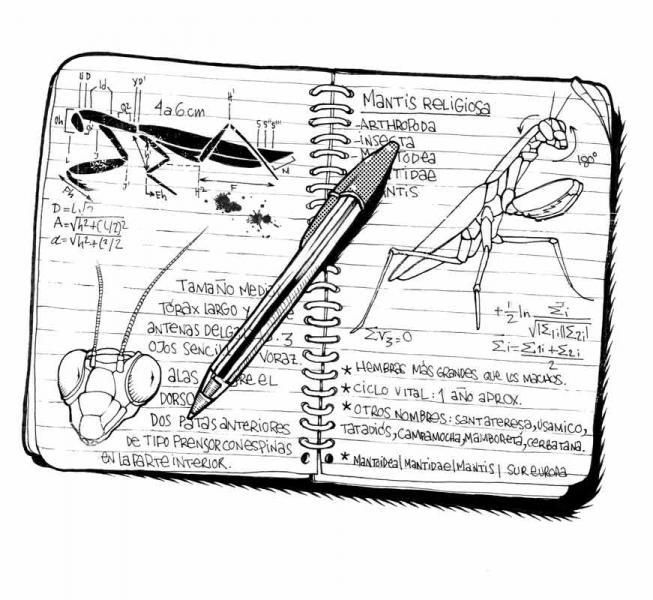 Ilustradora Noemí González Ilustración 06