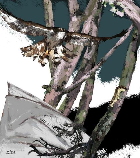 Ilustradora Zita Delaco ilustración 15